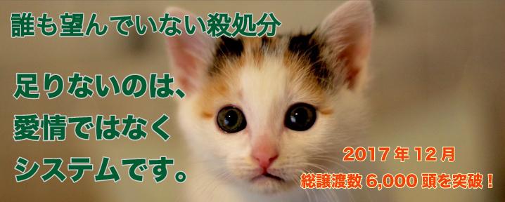 エイズ 検査 猫